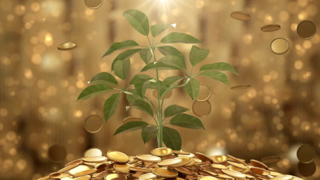plant and coins - investment stock videos and b-roll footage