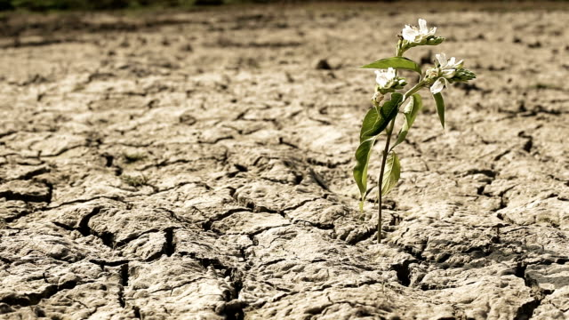 plant and drought land - arid stock videos & royalty-free footage
