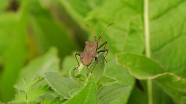 vídeos y material grabado en eventos de stock de plantas e insectos (el cáucaso occidental) - mosca insecto