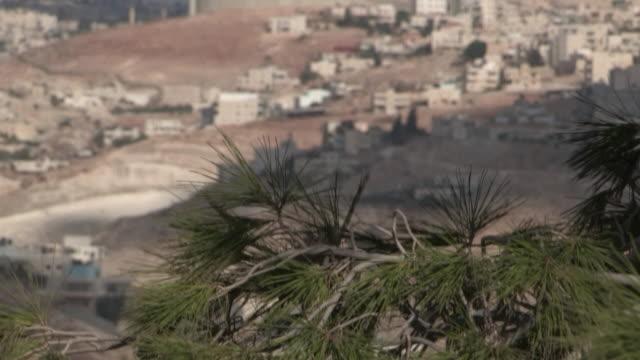 plant and wall, jerusalem, israel - 針状葉点の映像素材/bロール