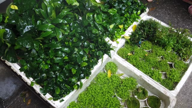 plant aquarium for sale at hang market at haiphong,vietnam - animals in captivity stock videos & royalty-free footage