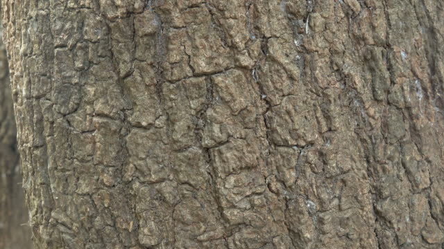plant bark - plant bark stock videos and b-roll footage