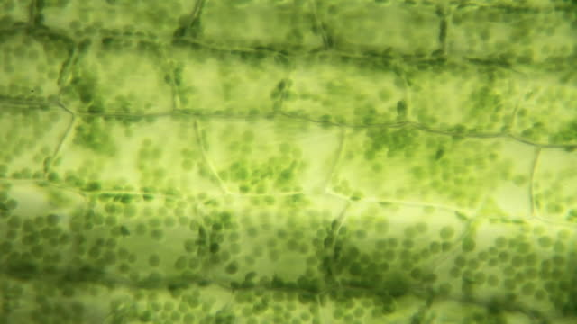 plant cells - botany stock videos & royalty-free footage