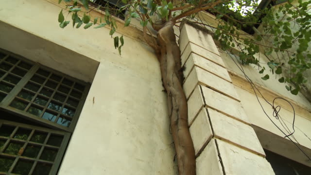 plant creeping on the corner of a building's wall - panning stock videos & royalty-free footage