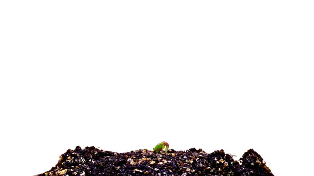 """Plant germination, time-lapse footage"""