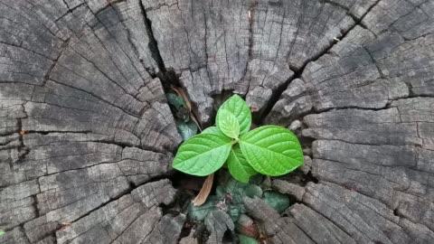 pflanze wächst aus baumstumpf - baumstumpf stock-videos und b-roll-filmmaterial
