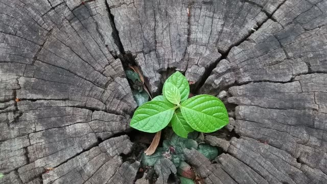 plant growing out of tree stump - tree trunk stock videos & royalty-free footage