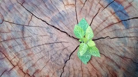 pflanze wächst durch stamm baumstumpf - baumstumpf stock-videos und b-roll-filmmaterial