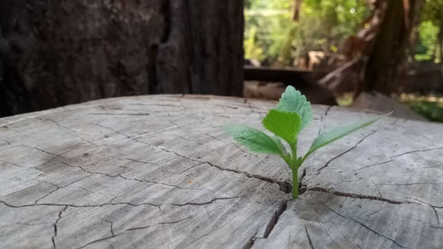 plant growing through of trunk of tree stump - wood texture stock videos and b-roll footage