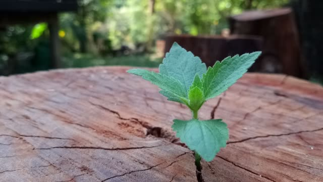 plant growing through of trunk of tree stump - new chance stock videos & royalty-free footage