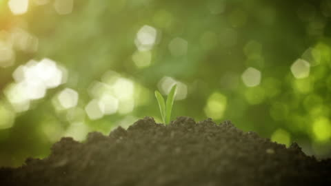 plant growth - growth stock videos & royalty-free footage
