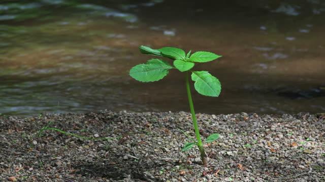 plant davanti creek (loop - riva del fiume video stock e b–roll