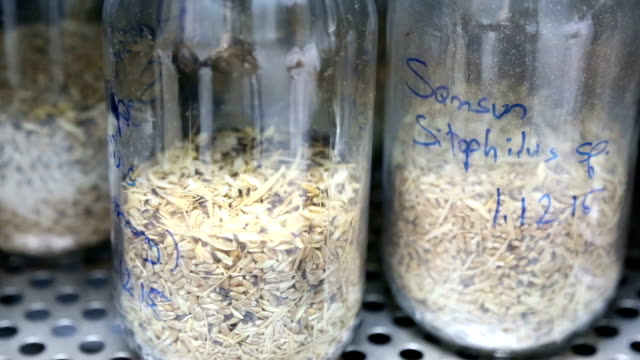 plant laboratory - pests stock videos & royalty-free footage