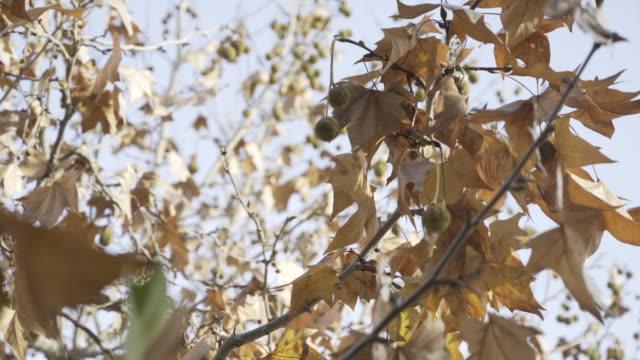 plant leaf nature