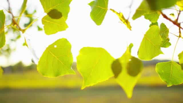 plant life in sunlight wyoming national park usa - hügelkette stock-videos und b-roll-filmmaterial