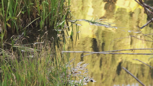 plant life in utah pond, tilt up - pond life stock videos and b-roll footage