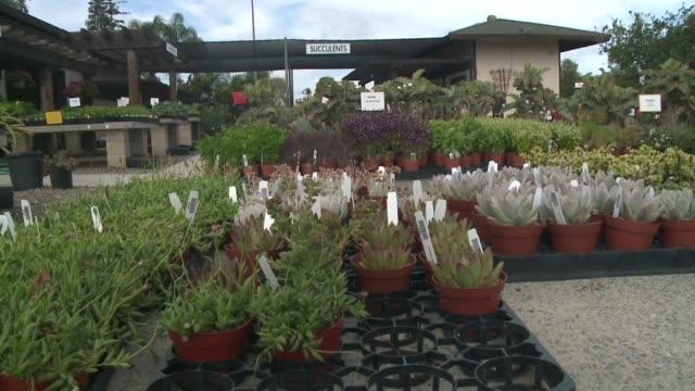 kswb plant nursery in oceanside - garden centre stock videos & royalty-free footage