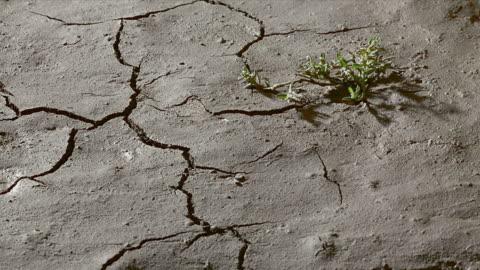 vidéos et rushes de plant sur terre fissurée au sec. - sol phénomène naturel