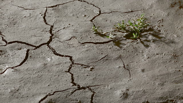 plant on cracked, dry earth. - drought stock videos & royalty-free footage