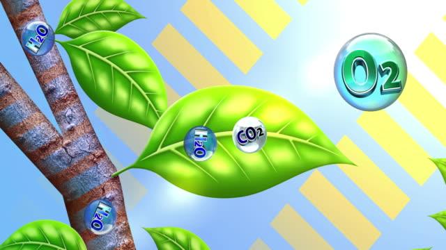 plant photosynthesis - fotosintesi video stock e b–roll