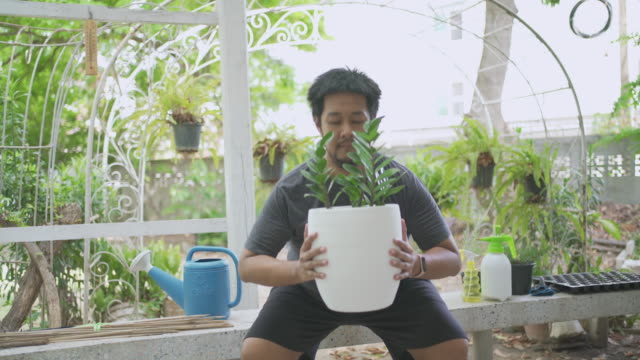 plant pot squat : man does squats holding tree pot instead of gym weights at home exercise - equipment stock videos & royalty-free footage
