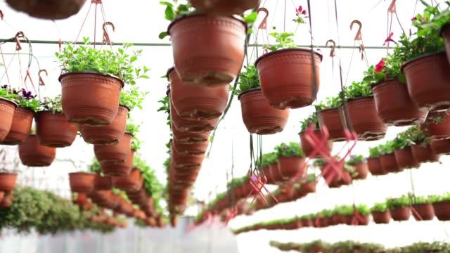 vidéos et rushes de pots de plante suspendus dans la serre de fleur - fleuriste