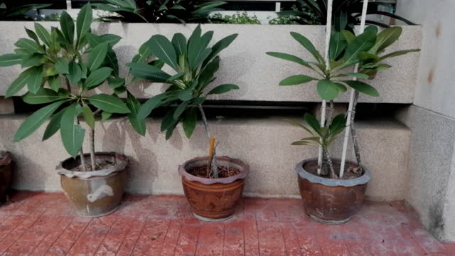plant pots next to the building. - next to stock videos & royalty-free footage