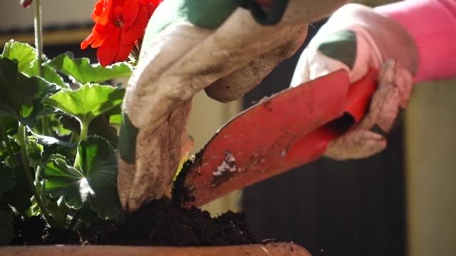 Plant Potting.
