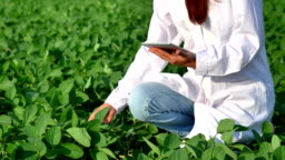 A plant specialist, checking the field soy, in a white coat makes a test analysis in a tablet, a background of greenery. Concept ecology, bio product, inspection, water, natural products, professional
