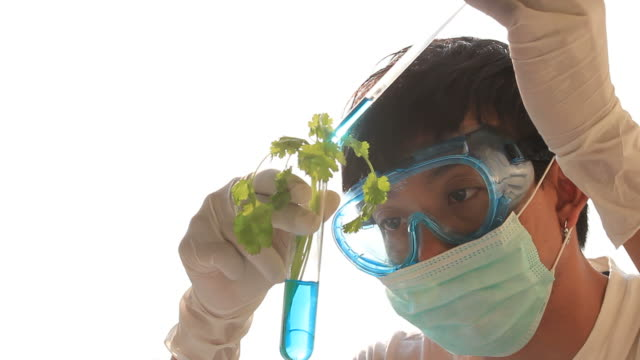 plant testing - safety stock videos & royalty-free footage