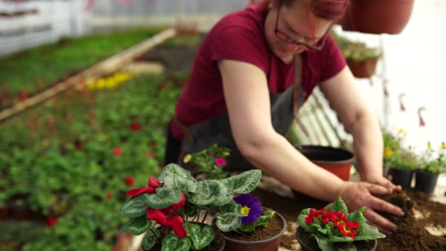 plant transplantation in a greenhouse - plant nursery stock videos and b-roll footage