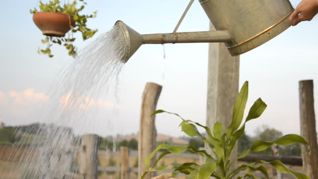 plant watering - watering can stock videos and b-roll footage