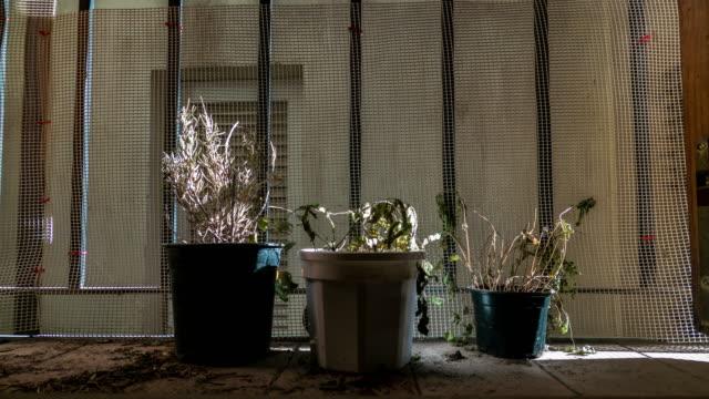 plantas muertas y secas timelapse con luz de atardecer encerradas