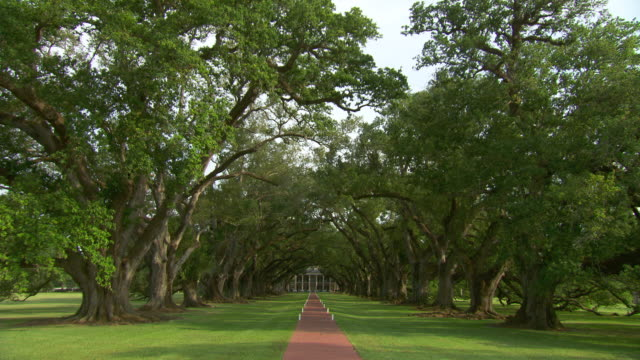 ws plantation house at end of tree lined path / new orleans, louisiana, united states - südliche bundesstaaten der usa stock-videos und b-roll-filmmaterial