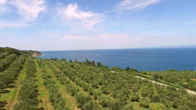 vídeos y material grabado en eventos de stock de aérea plantación de olivo - orchard