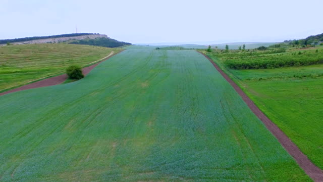plantations of chicory, aerial video - catalogna video stock e b–roll