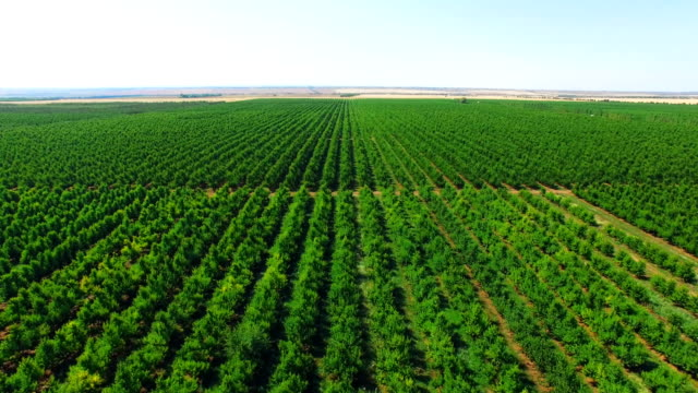 aerial: plantations with orchards - botany stock videos & royalty-free footage
