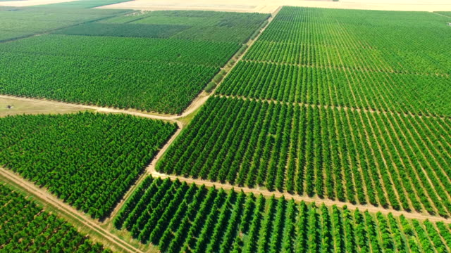 AERIAL: Plantations with orchards