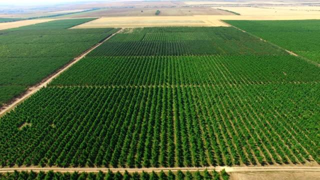 航空: 果樹園のプランテーション - 果樹園点の映像素材/bロール