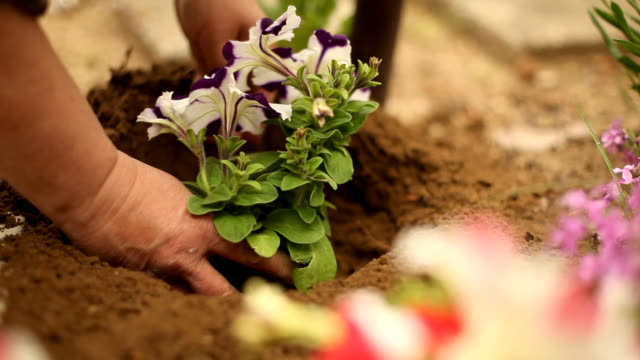 planting a new flower, gardening