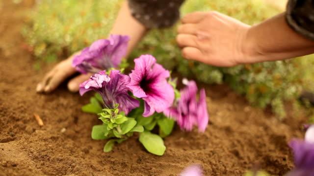 vídeos de stock e filmes b-roll de plantando novas flores e jardinagem - colocar planta em vaso