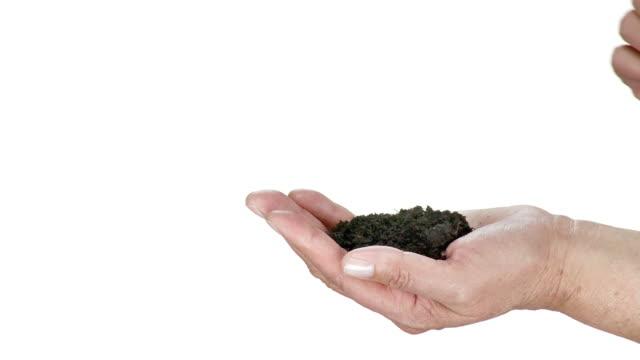 HD: Planting A Seedling