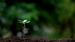 Planting a tree and for save the earth and natural , clean ecology in natural.