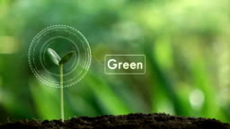 Planting a tree and Green hologram for save the earth and natural , clean ecology in natural.