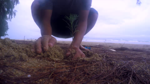 planting a tree on the beach - stock video - biologist stock videos & royalty-free footage
