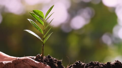 planting a tree - slow motion - plant stock videos & royalty-free footage