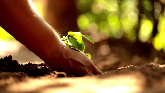 planting a tree, slow motion - giardinaggio video stock e b–roll