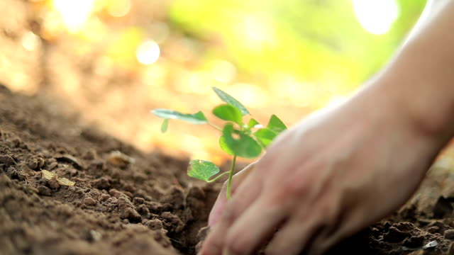 Planting a tree, Slow motion