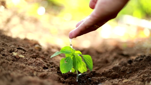 planting a tree, slow motion - peanut food stock videos & royalty-free footage
