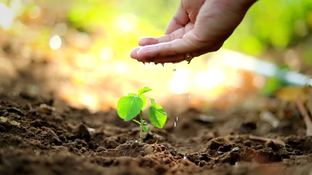 planting a tree, slow motion - gardening stock videos & royalty-free footage